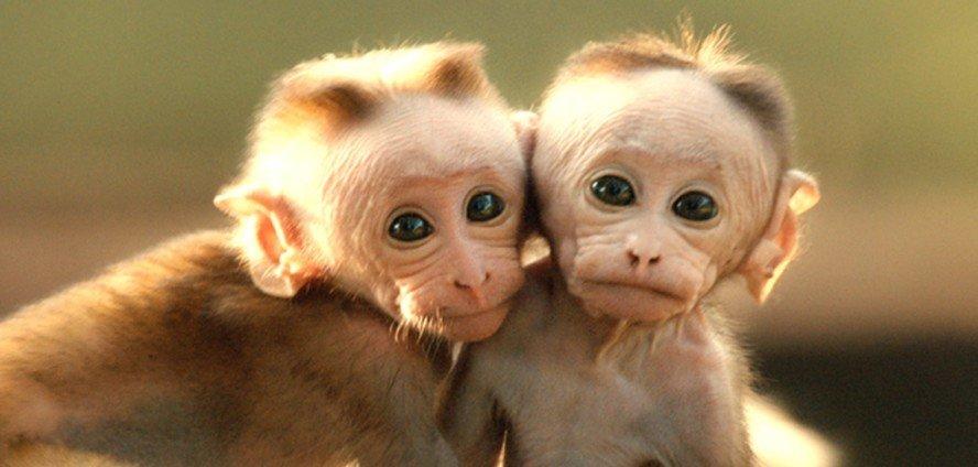 monkey-kingdom-giveaway